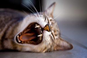 Un gato deja de comer