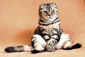 Entorno ideal para un gato de piso